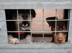 Psi-azil-Bistrica